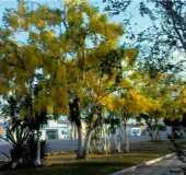 Fotos - Sapeaçu - BA