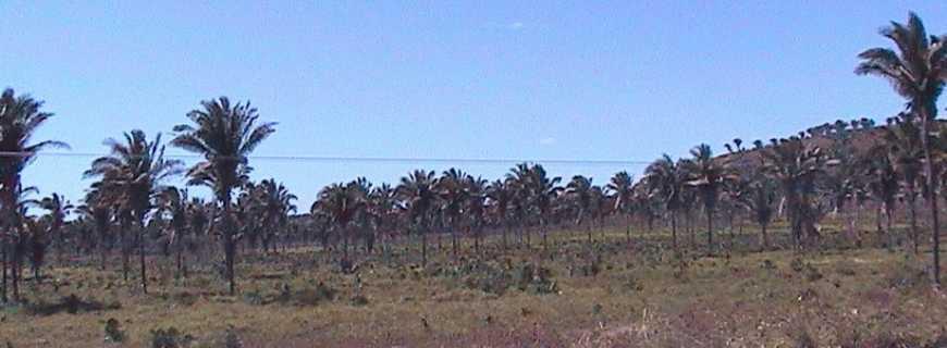 Brejo de São Félix-MA