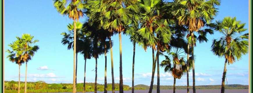Nazaré do Piauí-PI