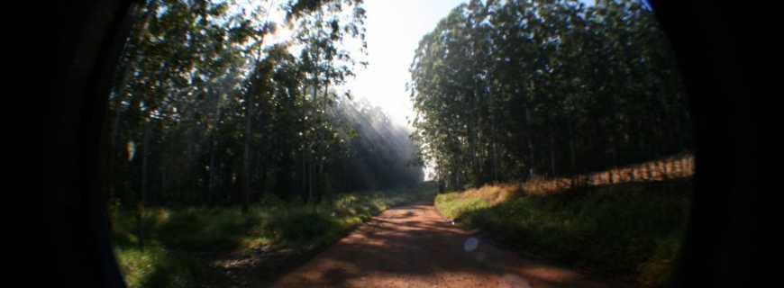 Palmital de São Silvestre-PR