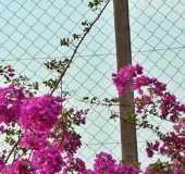 Fotos - Pulinópolis - PR