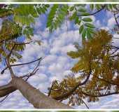Fotos - Selva - PR