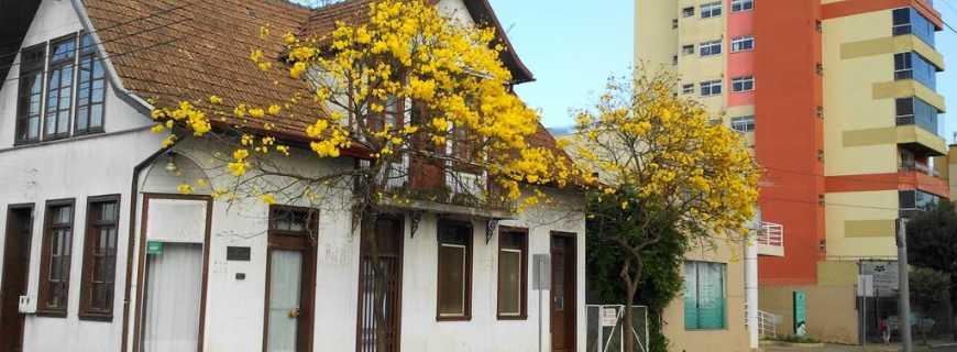 Curitibanos-SC