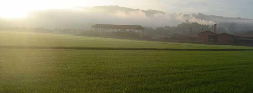 Laurentino-SC