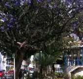 Fotos - Aruj� - SP