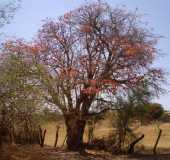 Fotos - Presidente Dutra - BA