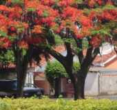 Fotos - Primavera - SP