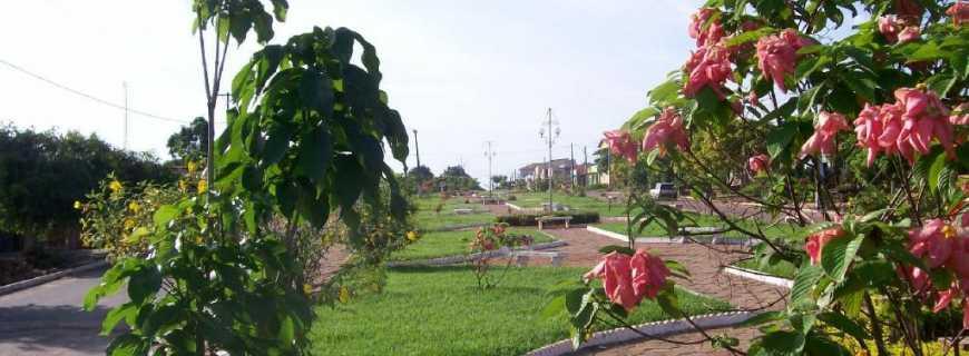 Augustinópolis-TO