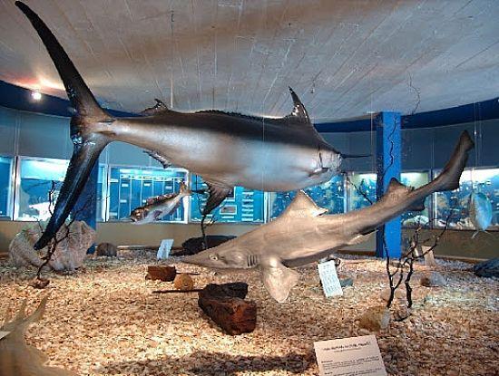 Resultado de imagem para Museu Oceanográfico de Rio Grande
