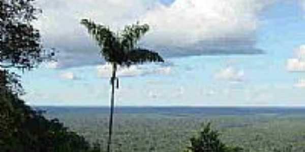 Parque Serra do Divisor-Foto:JEZAFLU=ACRE=BRASIL