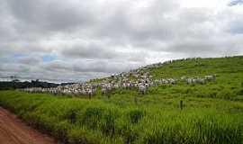 Rondolândia - Rondolândia-MT-Pastagem-Foto:Henrique Fortes