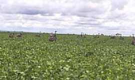 Santa Rita do Trivelato - Emas no plantio de soja-Foto:kidney franklin