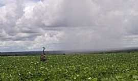 Santa Rita do Trivelato - Ema em plantio de soja por kidneu franklin