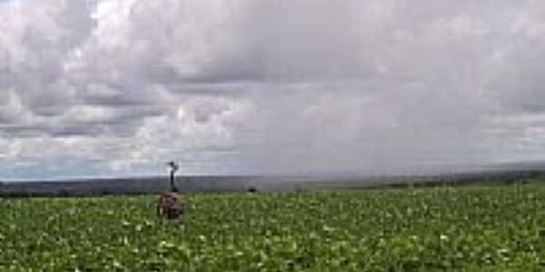 Ema em plantio de soja por kidneu franklin