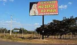 Pau D