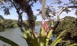 Rialma - Rialma-GO-Bromélia e o rio-Foto:julierme gontijo