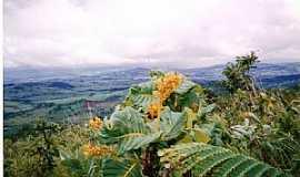 Rialma - Rialma-GO-Flor do serrado no Morro do Alem-Foto:julierme gontijo