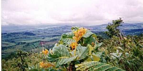 Rialma-GO-Flor do serrado no Morro do Alem-Foto:julierme gontijo