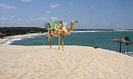 Praia de Genipabu - Dromedário para passeio turístico na Praia de Genipabu-RN-Foto:EDUARDO FIGUEIREDO