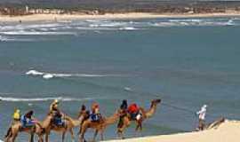 Praia de Genipabu - Passeio de Dromedário na Praia de Genipabu-RN-Foto:Cleber Lima