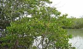 Jericoacoara - Mangue do Parque Nacional de Jericoacoara-CE-Foto:Aldízio Lima de Oliv…
