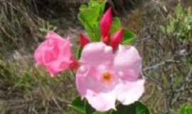 Vale do Capão - flores silvestres do capão, Por Marcos Lima
