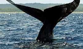 Abrolhos - Abrolhos-BA-Cauda da Baleia Jubarte no Parque Nacional de Abrolhos-Foto:Patricia Santos/Reuters