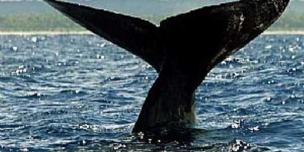Abrolhos-BA-Cauda da Baleia Jubarte no Parque Nacional de Abrolhos-Foto:Patricia Santos/Reuters