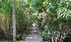 �guas Claras - Passagem no Parque �guas Claras-Foto:pelosi
