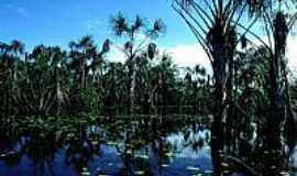 Reserva Xixuaú-Xiparinã - Buritizal no Rio Xixuaú em Reserva Xixuaú-Xiparinã-AM-Foto:Mette Irene Andersen