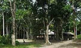 Reserva Xixuaú-Xiparinã - Casas da Comunidade de Reserva Xixuaú-Xiparinã-AM-Foto:Mette Irene Andersen