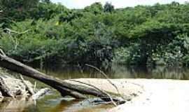 Reserva Xixuaú-Xiparinã - Mata e o Rio Xixuaú em Reserva Xixuaú-Xiparinã-AM-Foto:Mette Irene Andersen