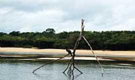 Reserva Xixuaú-Xiparinã - Belezas do Rio Jauaperi em Reserva Xixuaú-Xiparinã-AM-Foto:Mette Irene Andersen