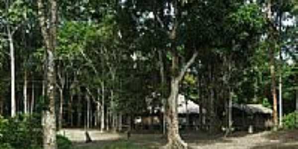 Casas da Comunidade de Reserva Xixuaú-Xiparinã-AM-Foto:Mette Irene Andersen