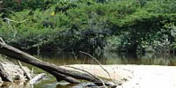 Mata e o Rio Xixuaú em Reserva Xixuaú-Xiparinã-AM-Foto:Mette Irene Andersen