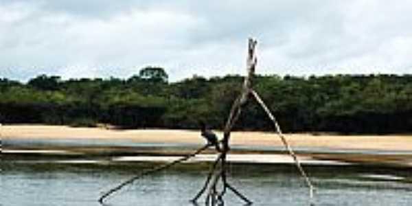 Belezas do Rio Jauaperi em Reserva Xixuaú-Xiparinã-AM-Foto:Mette Irene Andersen