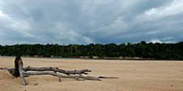Natureza em Reserva Xixuaú-Xiparinã-AM-Foto:Mette Irene Andersen