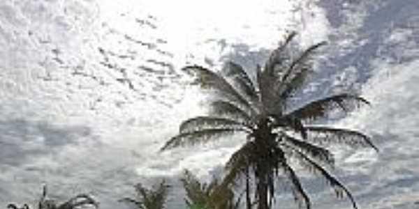 Praia do Canto Verde-CE-Coqueiros na praia-Foto:Attila Rivera