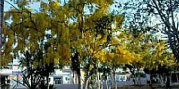 �rvores de Ac�cio na Pra�a em Sapea�u-BA-Foto:RicardoFilho