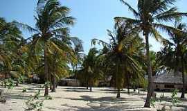 Barra Grande - Barra Grande-PI-Coqueiros e chalés na praia-Foto:Edilson Morais Brito