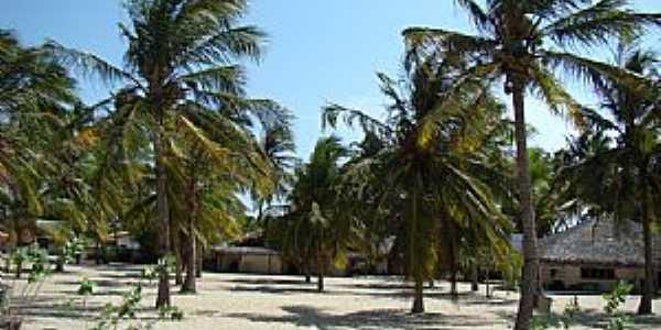 Barra Grande-PI-Coqueiros e chalés na praia-Foto:Edilson Morais Brito