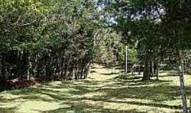 Vale do Matutu - Trilha entre árvores em Vale do Matutu-Foto:flickr.
