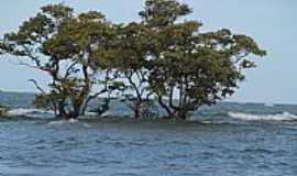 Praia Carro Quebrado - Ilhota na frente da Praia Carro Quebrado-AL-Foto:jamelu