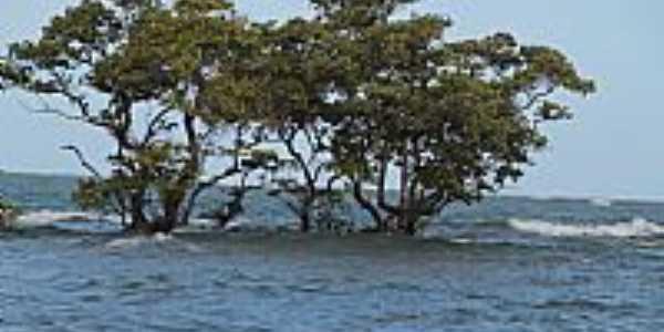 Ilhota na frente da Praia Carro Quebrado-AL-Foto:jamelu