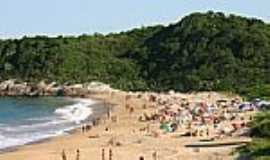 Praia do Pinho - Naturalista - Praia do Pinho - Naturalista