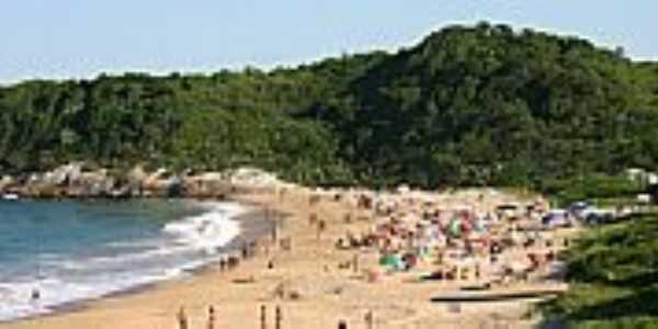 Praia do Pinho - Naturalista
