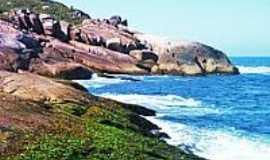 Praia da Galheta  - Naturalista - Costão da Galheta-Foto:marlongaspar