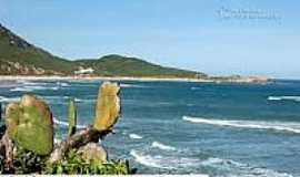 Praia da Galheta  - Naturalista - Vista da praia-Foto:litoraldesantacatarina.