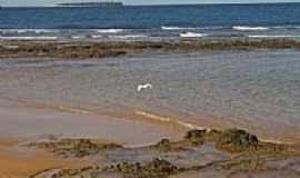 Praia da Ponta do Mutá - Garça no Mutá-Foto:Edgard Thomas