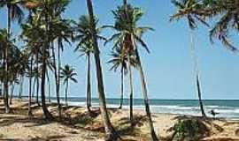 Praia de Cassange - Coqueiros na Praia do Cassange--Foto:flickr.